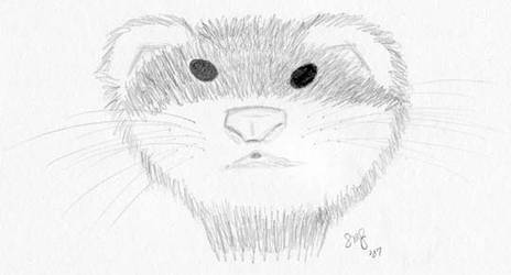 Gillie the Ferret by Avarahaiel