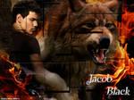 Twilight Saga-Jacob Black