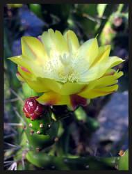 SA's flora II