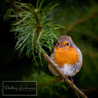 Christmas Angel by ShelleyJackman
