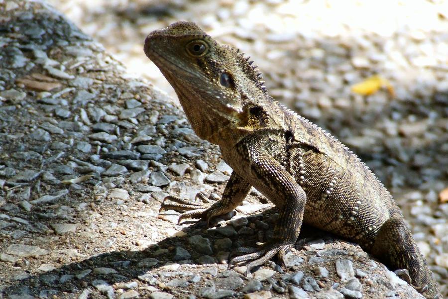 Lizard Lunch by matthew-lane