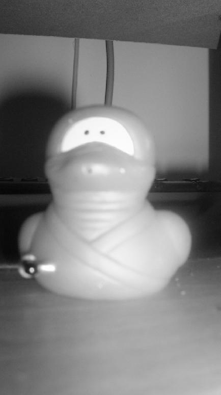 Ninja Duck by BlackPaperFlower