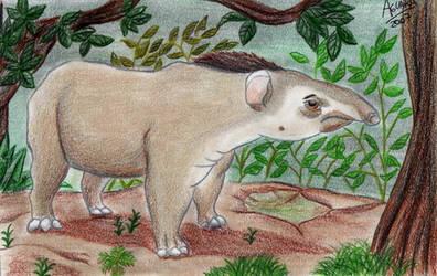 Tapir by LobaFeroz