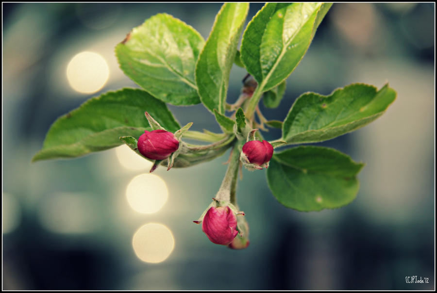Budding To Bloom by PhotoTini