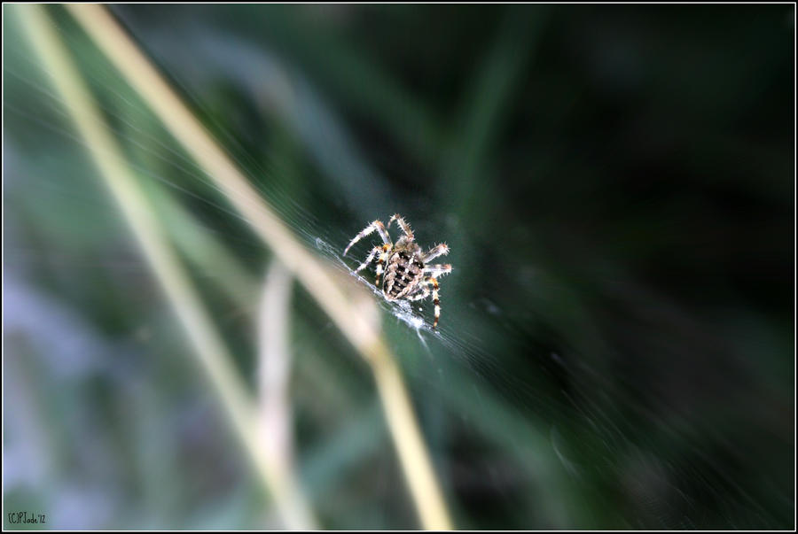 Speed of a spinning spider by PhotoTini
