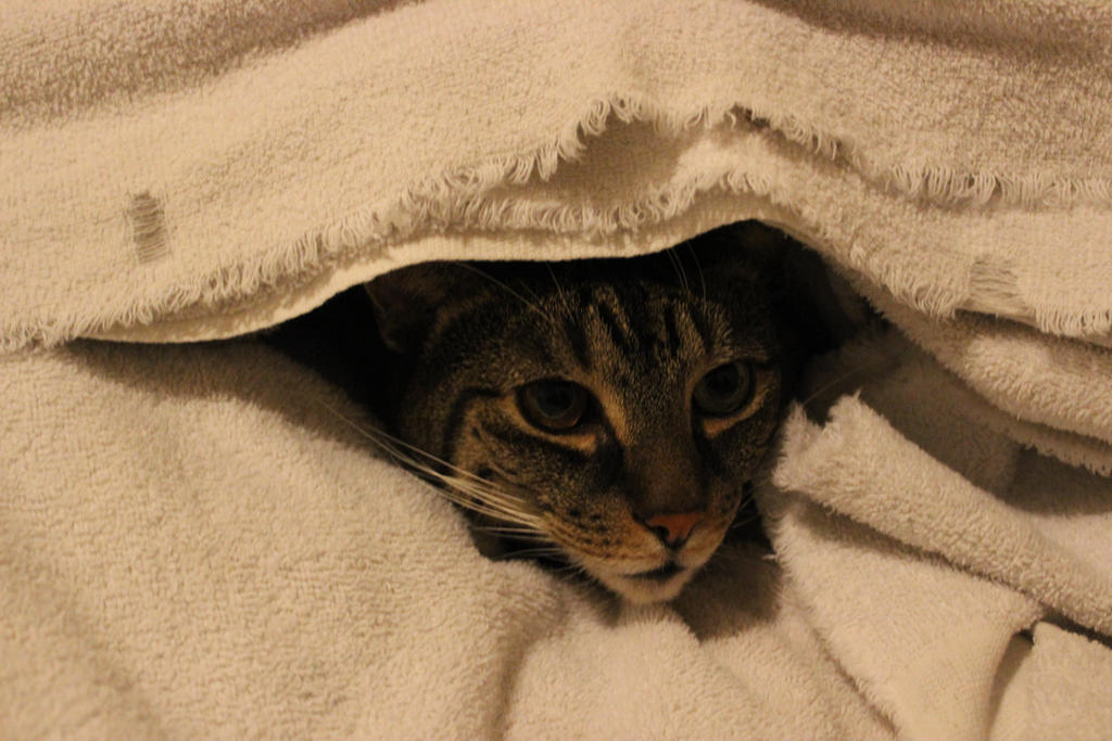 Soft Kitty warm Kitty by bagera3005