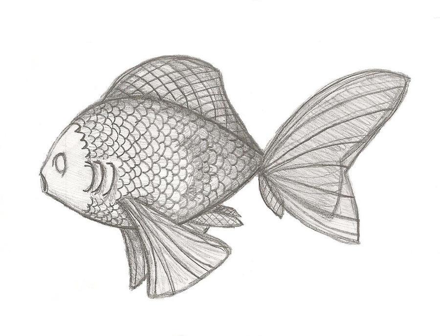 Fish Sketch By CallumWhite On DeviantArt