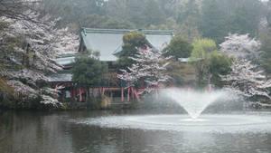 Kichijoji, Inokashira Park 8
