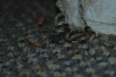 Spider by sockmonkeydogtoy