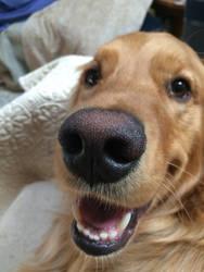 Dog by sockmonkeydogtoy