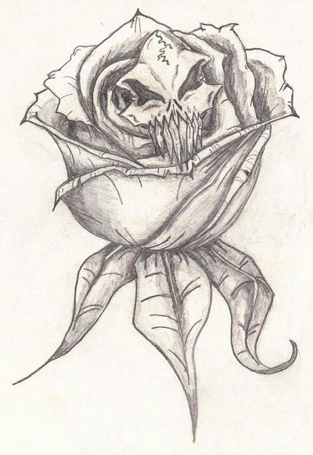 Skull with Roses Drawings