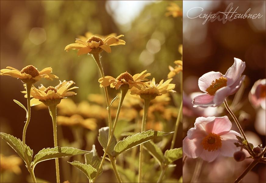 secret garden by meldir