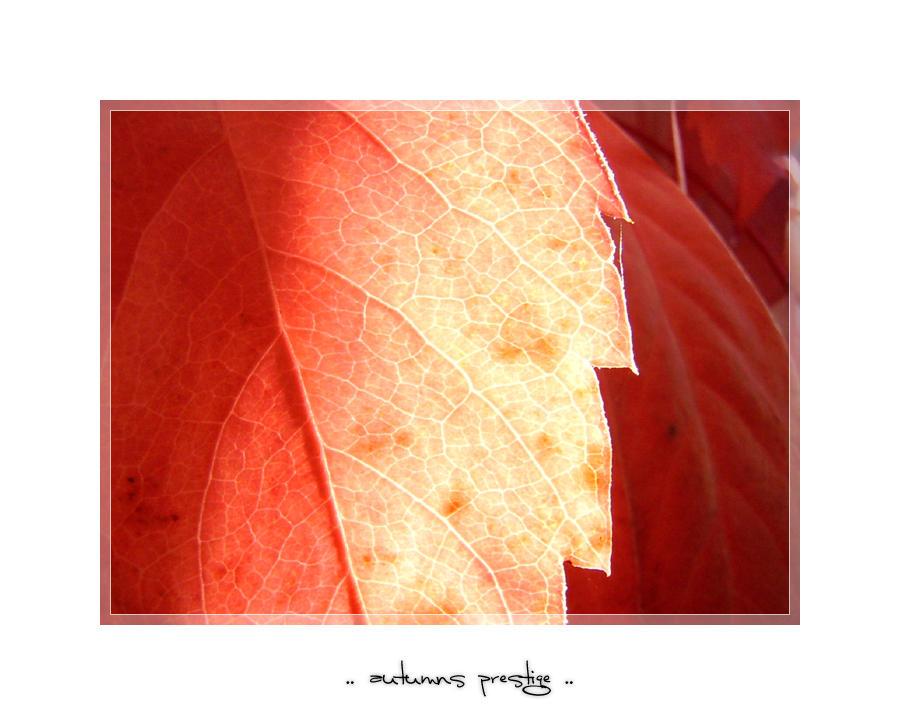 autumns prestige - III by meldir