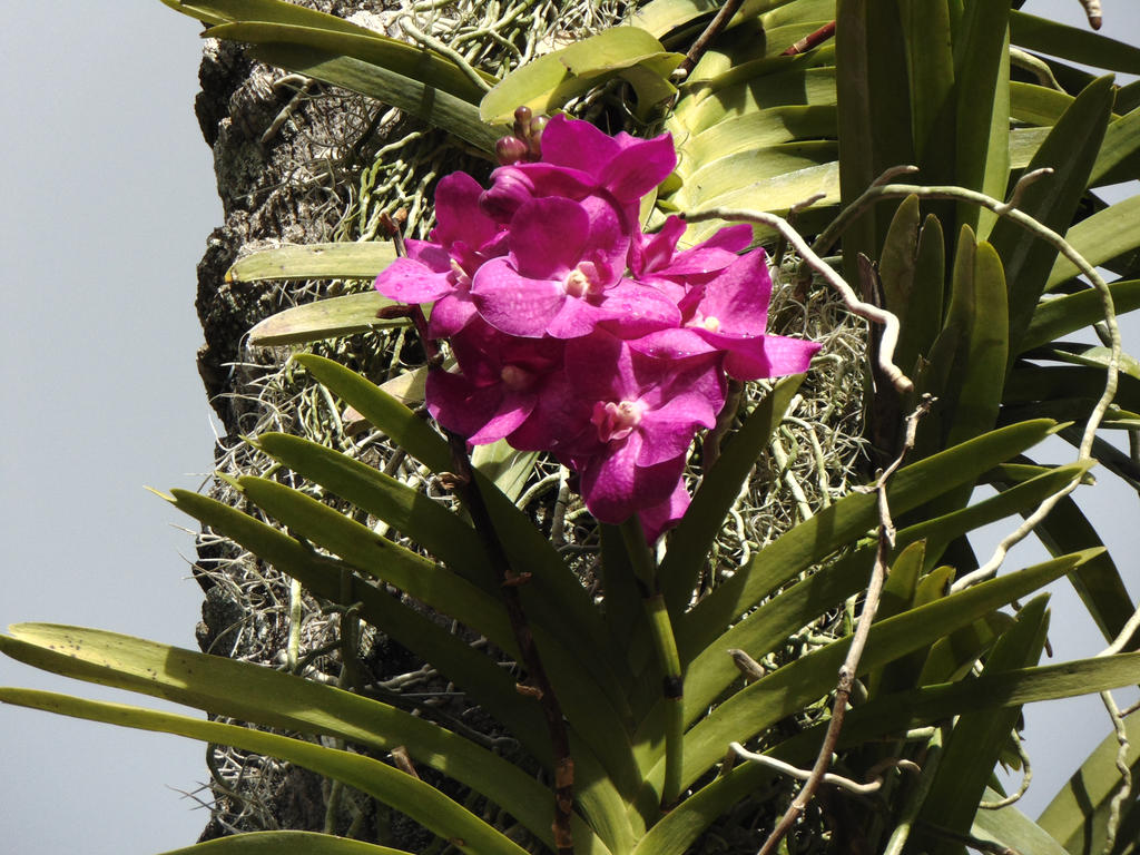Climbing Flower Vine By Lamoonstar On Deviantart