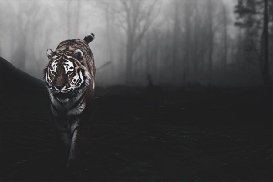 tiger background by a7md3mad on deviantart