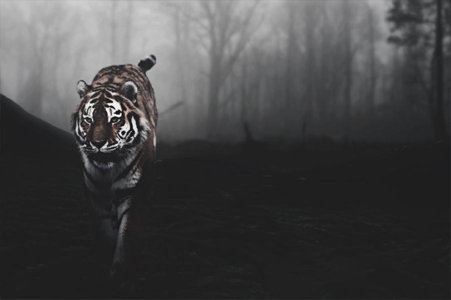 White tiger background tumblr - photo#4