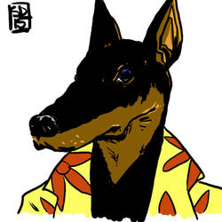 Hyperdog DSC