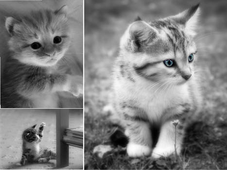 black and white cats 1