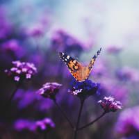 butterfly II by milkcookie