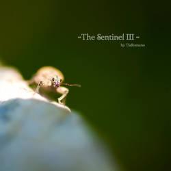The Sentinel III