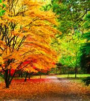 Autumn contrast by LW-M-E-D-I-A