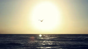 +Photo+ Flying above the sea..