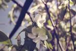 +Photo+ -  Spring flowers