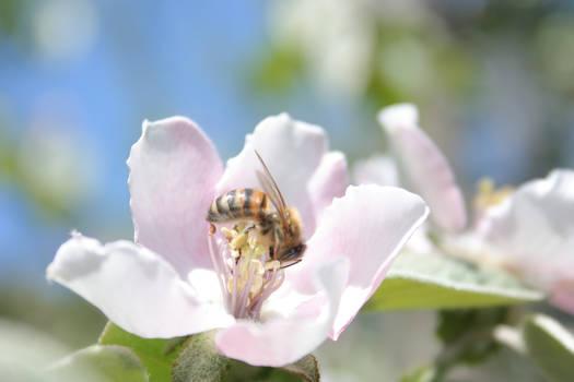 +Photo+ - Hungry bee