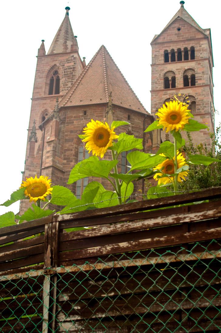 Sonnenblumen und Munster by Anussky