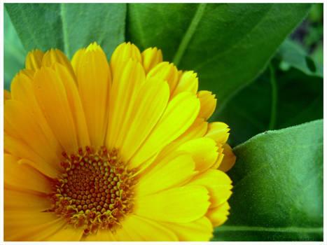 Orange.Maravilha