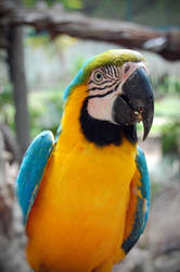 Annoying dude, this parrot