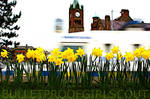 031 : Flowers