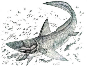 Parahelicoprion