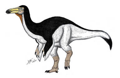 Paraxenisaurus normalensis