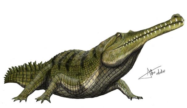 Gavialoidea IHNFG-2915