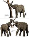 Possible uses of Deinotherium tusks