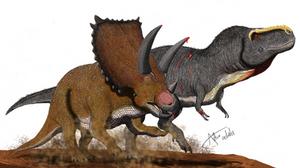 Bravoceratops vs Tyrannosaurus