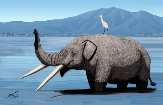 Stegomastodon primitivus
