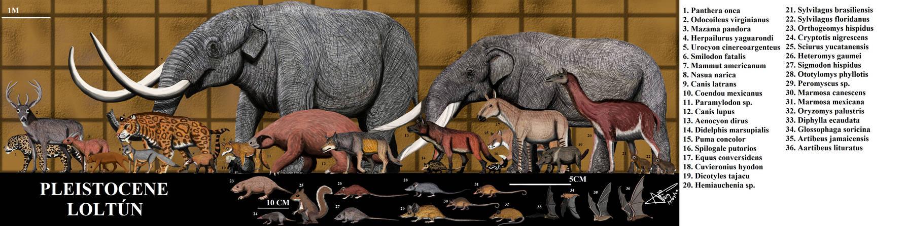Loltun Pleistocene mammals