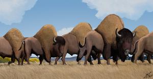 Bison antiquus