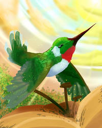 Hummingbird by NovaStar134