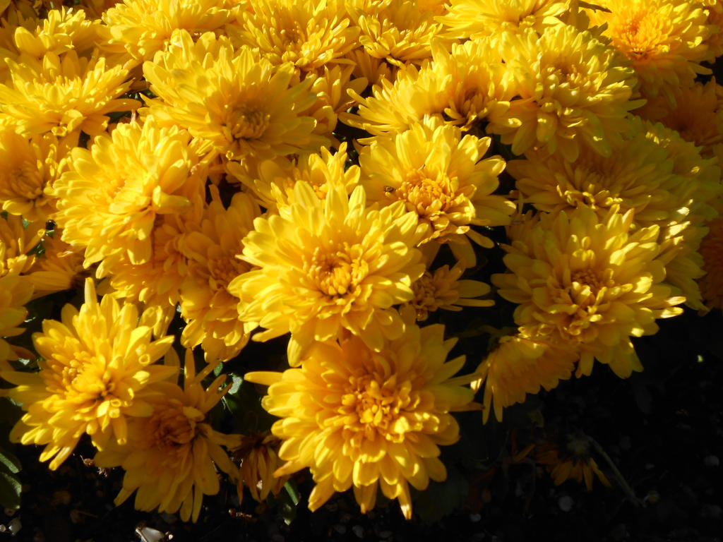 Yellow flowers by pllaura on deviantart yellow flowers by pllaura mightylinksfo