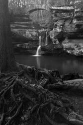 Upper Falls 2010 with Roots