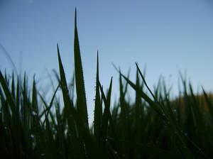 through the looking grass