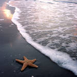 starfish by foureyestock