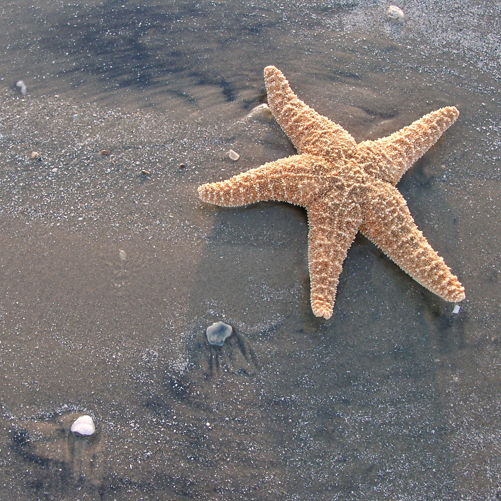 starfish 3 by ~foureyestock