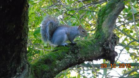 Squirrel on tree by Midnight-PowerUser