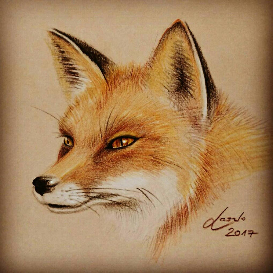 Red fox colored pencils sketch  by Skulpturen