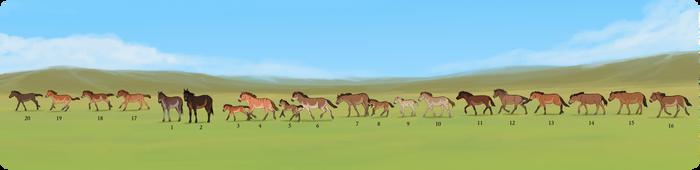 /HA/ Tiris' Herd by BUGHS-22