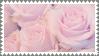[f2u] pink roses by kor-ka